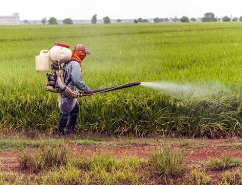 Glisofato: la Monsanto continua ad alterare i dossier.