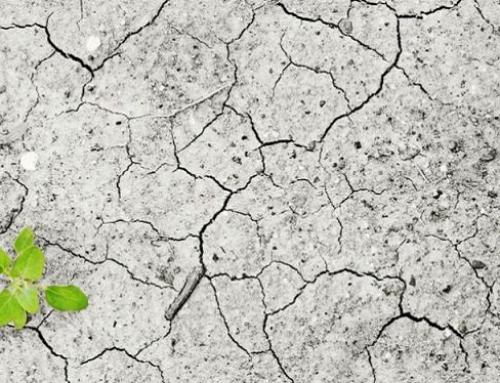 Pubblicato il Decreto Interministeriale sulla Bonifica e il Ripristino Ambientale dei terreni agricoli