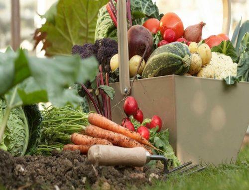Il mese di settembre nell'orto tra semine, lavori e raccolti