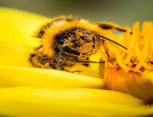 Le api, le regine della biodiversità