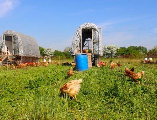 """Il """"Benessere Animale"""" è ciò a cui mirano gli allevamenti biologici."""