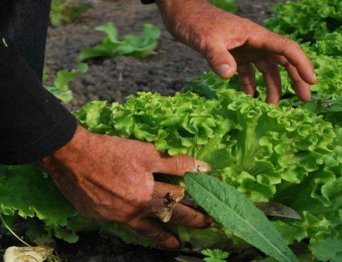Il mese di novembre nell'orto tra semine, lavori e raccolti.