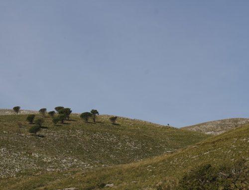 AIAB Calabria propone due nuovi eventi del progetto BioLand