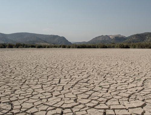 Il 17 giugno è stata la Giornata Mondiale contro la Desertificazione e la Siccità