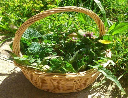 Le 10 piante più comuni di erbe spontanee commestibili calabresi