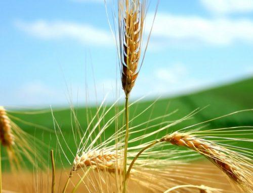 La Regione Calabria pubblica un bando per il sostegno a favore di agricoltori e PMI colpiti dalla crisi Covid-19