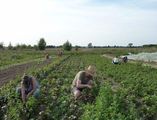 Si parlerà di Agricoltura Sociale e tutela della Biodiversità il 9 ottobre, nei 2 incontri di Bio Land organizzati da AIAB Calabria