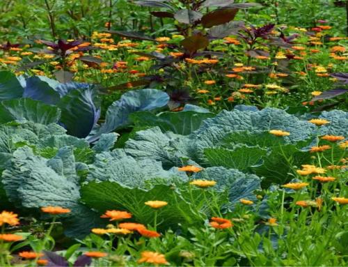 Le buone proprietà delle verdure autunnali