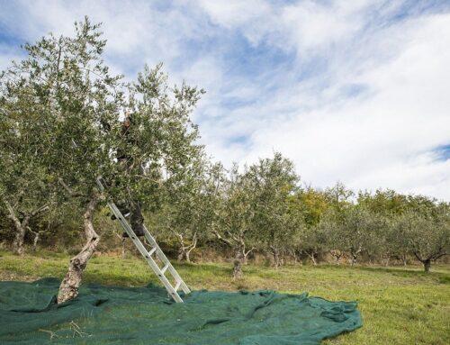 Covid-19: consentiti spostamenti anche per agricoltori hobbisti nelle zone rosse, quindi per la gestione dell'orto e raccolta olive