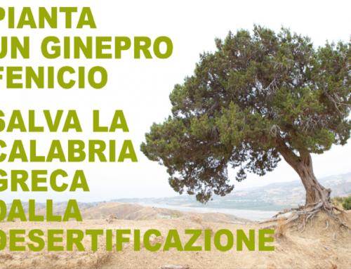 """Sostieni anche tu la campagna: """"Un Ginepro Fenicio contro la desertificazione""""!"""